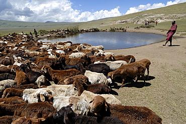 Ngorongoro Conservation Area, UNESCO World Heritage Site, Tanzania, East Africa, Africa