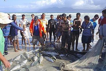 Fishermen inspecting catch, Muizenberg, Cape Province, South Africa, Africa