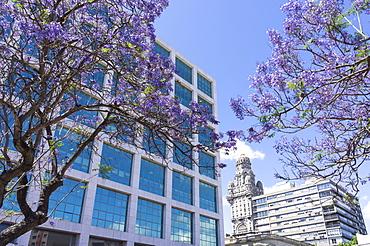 Centre of town and Palacio Salvo, Montevideo, Uruguay, South America