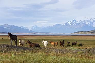 Los Glaciares National Park, UNESCO World Heritage Site, Patagonia, Argentina, South America