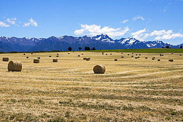 Hay field in the landscape, Patagonia, Argentina, South America