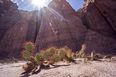 Los Colorados, Salta region, Argentina, South America