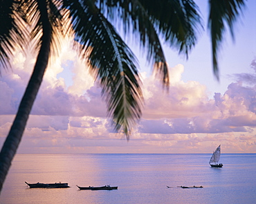 Looking out on the Indian Ocean, Zanzibar, Tanzania, East Africa, Africa