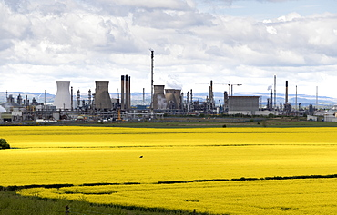 Grangemouth oil refinery and fields of rapeseed, Stirlingshire, Scotland, United Kingdom, Europe