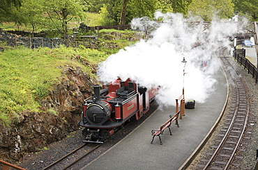Steam engine Dafydd Lloyd George at Tan-y-Bwlch Station on the Ffestiniog Railway, Wales, United Kingdom, Europe