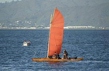 Maori Sailing Waka at 2018 Waka Odyssey, Wellington waterfront, New Zealand, Oceania