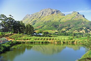 Rural scenic near Stellenbosch, Cape Province, South Africa, Africa