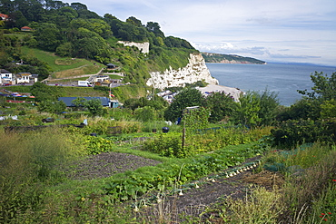 Allotments on the coast at Beer, Devon, England, United Kingdom, Europe