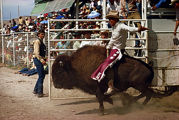 Rodeo riding, Gallup, New Mexico, United States of America, North America