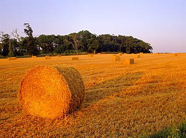 Hay bales, Suffolk, England, UK, Europe