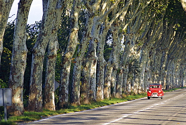 Tree lined rural road, Provence, France, Europe