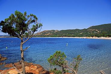 Palombaggia beach, Porto Vecchio, Corsica, France, Mediterranean, Europe