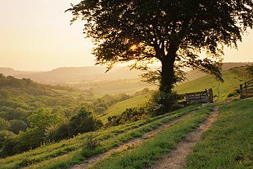 Countryside near Sidmouth, Devon, UK