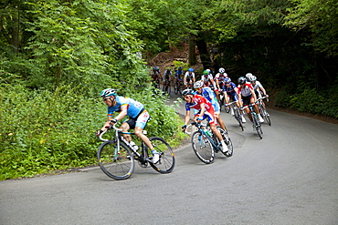 Cyclists on The Zig Zag, London Surrey Classic cycle race, Box Hill, site of 2012 Olympics cycling road race, Surrey Hills, Surrey, England, United Kingdom, Europe