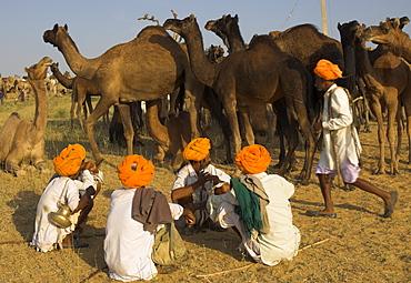 Men in bright turbans at huge camel and cattle fair for semi nomadic tribes, Pushkar Mela, Pushkar, Rajasthan state, India, Asia