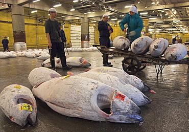 Workers loading frozen fish onto trolley at tuna auction, Tsukiji fish market, Tokyo, Honshu, Japan, Asia