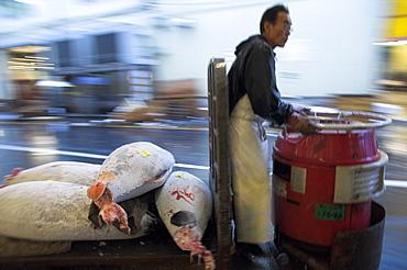 Worker driving motor trolley loaded with frozen fish for tuna auction, Tsukiji fish market, Tokyo, Honshu, Japan, Asia