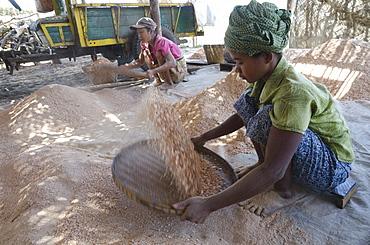 Production of shrimp powder in a fish farm, Irrawaddy Delta, Myanmar (Burma), Asia