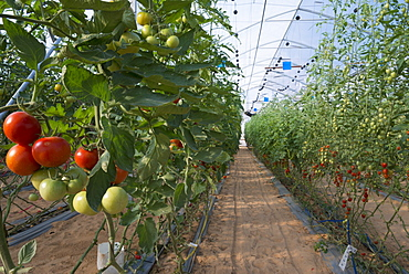 Greenhouses at the Negev Heights Agro Research Center, Halutza, Israel, Middle East