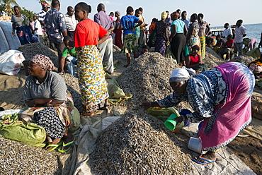 Fish market, Musoma, Lake Victoria, Tanzania, East Africa