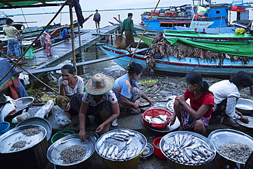 Women selling fish on a jetty, Labutta market, Irrawaddyi division, Myanmar (Burma), Asia