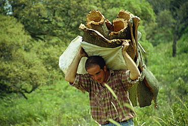 Carrying a load of cork during harvest, Sardinia, Italy, Europe