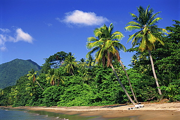 Palm lined beach, Dominica, West Indies, Caribbean, Central America