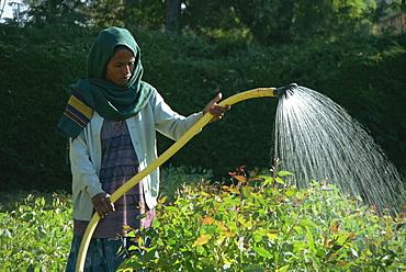 Woman watering crops, Mekele, Ethiopia, Africa