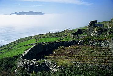 Stone walls dividing fields, Slea Head, County Kerry, Munster, Republic of Ireland, Europe