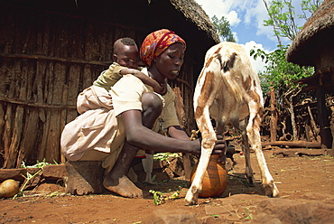 Mother with baby on her back milking goat, Harar, Ethiopia, Africa