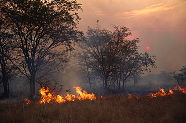 Burning the stubble, wind blown fire at sunset, Uganda, East Africa, Africa