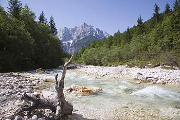 View along stony shallow River Velika Pisnca with crystal clear water to Prisank mountain, Triglav National Park, Julian Alps, Kranjska Gora, Dolina, Slovenia, Europe