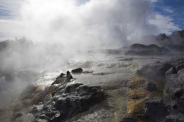 Pohutu geyser erupting steaming water from sulphurous mud and rock in Te Puia, Whakarewarewa Thermal Reserve in geothermal valley, Rotorua, North Island, New Zealand, Pacific