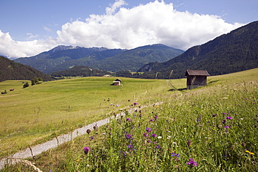 Summer Alpine flowers and meadows in green valley, Imst, Austria, Europe