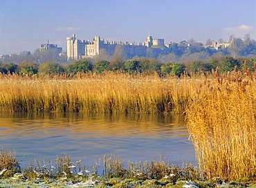 Reeds beside the River Arun, with Arundel Castle, the ancestral home of the Dukes of Norfolk beyond, Warningcamp, Arundel, West Sussex, England, UK, Europe