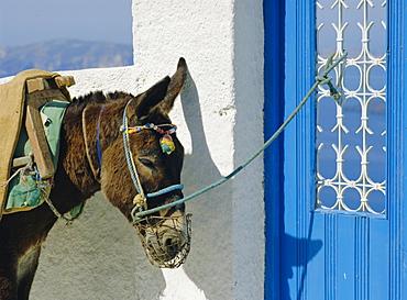 Donkey, Thira, Santorini, Cyclades Islands, Greece, Europe