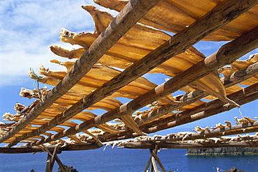 Cod drying, Camara de Lobos, Madeira, Portugal, Atlantic, Europe