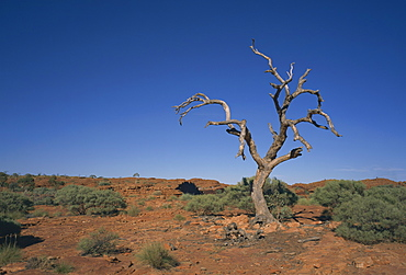 Arid landscape with dead tree in Kings Canyon, Watarrka National Park, Northern Territory, Australia, Pacific