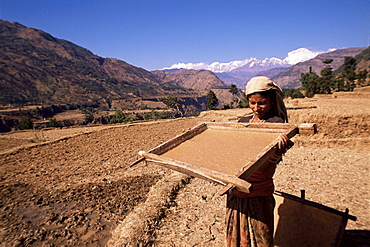 Lhokta paper being soaked and dried in sun in wooden frame on a U.N. funded project, Bhaktapur (Bhadgaun), Nepal, Asia