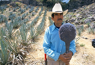 Tequila plantation worker, Mexico, North America