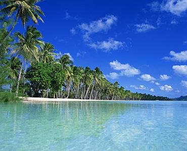 Palm trees fringe the tropical beach and turquoise sea on Bora Bora (Borabora), Tahiti, Society Islands, French Polynesia, Pacific Islands, Pacific