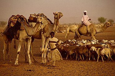 People and livestock during famine in 1997, Darfur, Sudan, Africa