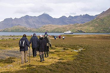 Walking toward Stromness Bay, South Georgia, South Atlantic