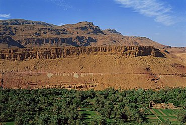 Trees and fields below arid mountains, Tinerhir Palmeries on the way to Todra Gorge, Morocco, North Africa, Africa