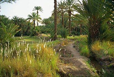 Zagora, Morocco, North Africa, Africa