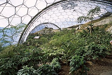 Biome interior, The Eden Project, near St. Austell, Cornwall, England, United Kingdom, Europe