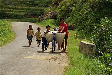 Small group of children carrying load on bicycle and walking up a country road, Toraja area, island of Sulawesi, Indonesia, Southeast Asia, Asia