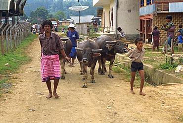 Rantepao, Toraja area, Sulawesi, Indonesia, Southeast Asia, Asia