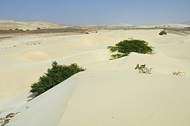 Desert and sand dunes in the middle of the island of Boa Vista, Cape Verde Islands, Africa