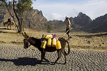Donkey carrying water, Santo Antao, Cape Verde Islands, Africa